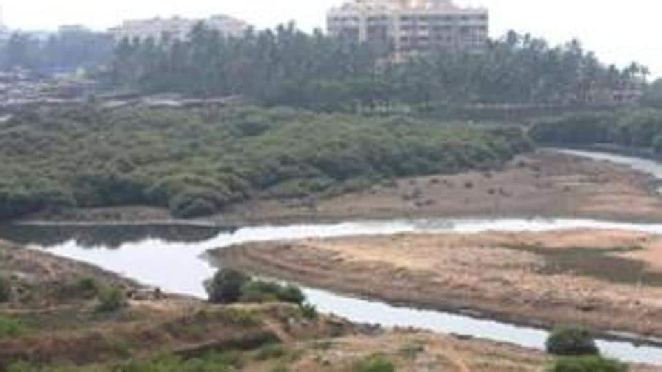 Mumbai,mangrove destruction,mangrove