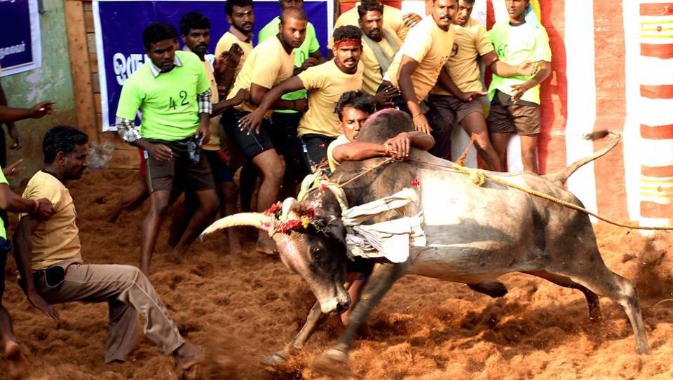 Participants try to tame a bull at Alaganllaur Jallikattu near Madurai on Thursday.