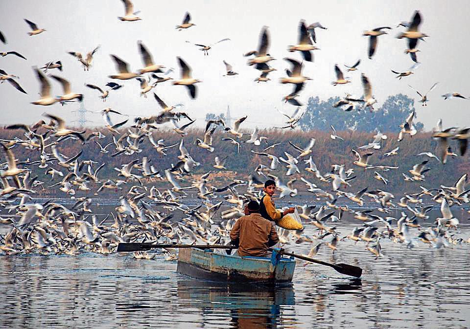 Asian Waterbird Census,Yamuna birds,Delhi wetlands