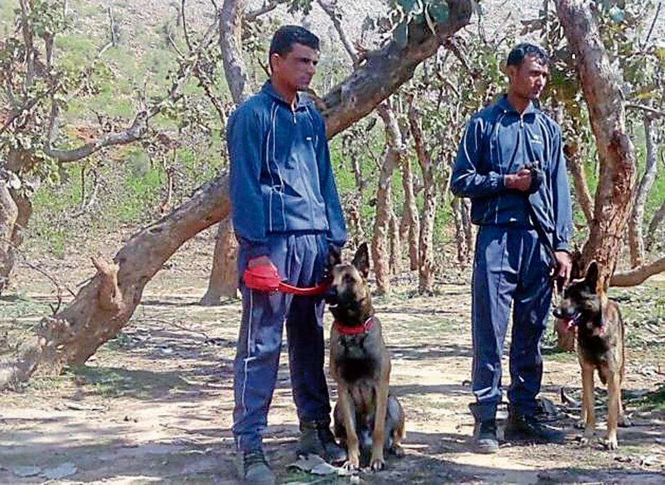 The officials of the dog squad on the lookout for the killer panther at Sariska in Alwar district.