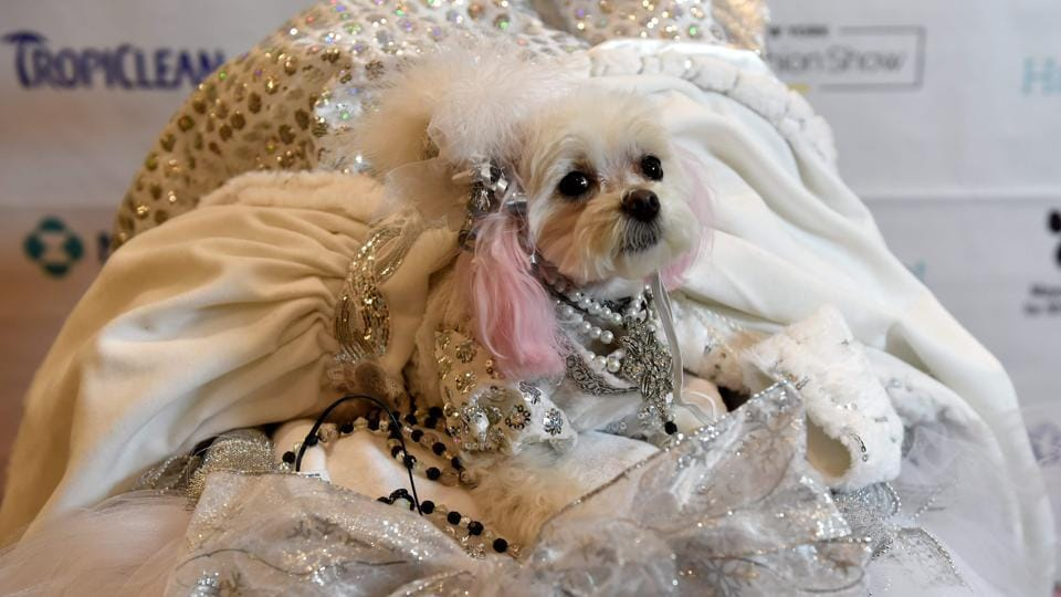 ZZ, representing Russia in the World Fashion Presents segment, during the 14th Annual New York Pet Fashion Show presented by TropiClean at the Hotel Pennsylvania February 9, 2017.  (TIMOTHY A. CLARY / AFP)