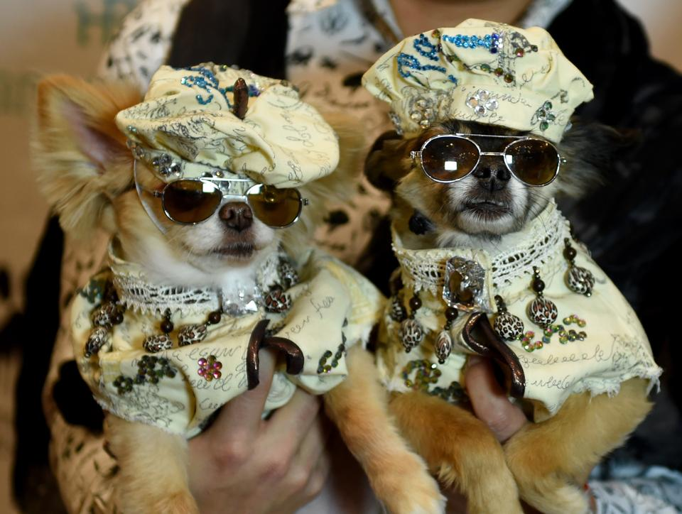 Dogs dressed in French fashion for the World Fashion Presents segment pose during the 14th Annual New York Pet Fashion Show presented by TropiClean at the Hotel Pennsylvania on February 9, 2017.  (TIMOTHY A. CLARY / AFP)