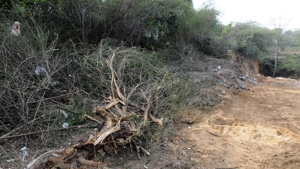 As many as 60 trees were chopped in Sikanderpur forest area on Tuesday. Forest department and municipal corporation of Gurugram (MCG) were not aware of the incident and both send teams to check the situation and stop the activity after residents in the area lodged a complaint.