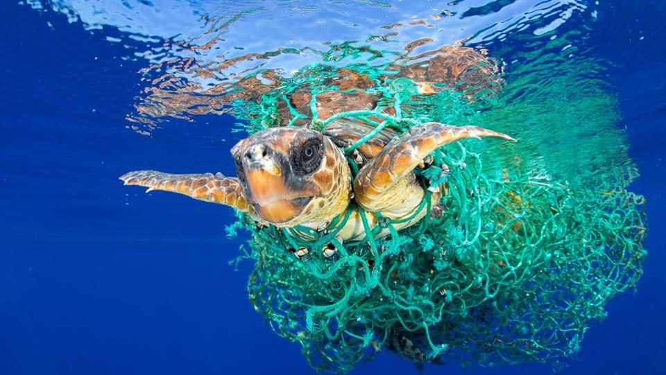 Nature, first prize: A sea turtle entangled in a fishing net swims off the coast of Tenerife, Canary Islands in Spain.  (Francis Perez)
