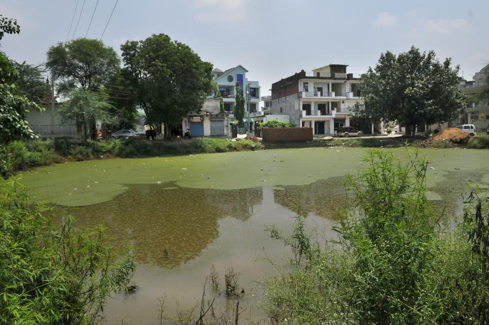 View of the Ghata lake in Gurgaon.