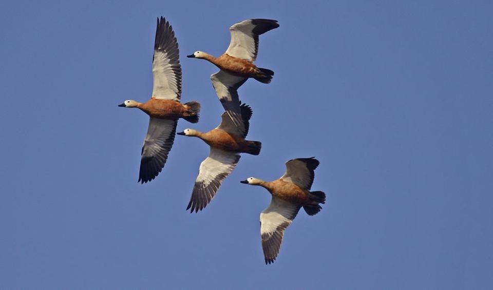 Bird Race,Bird Count,Sunjoy Monga