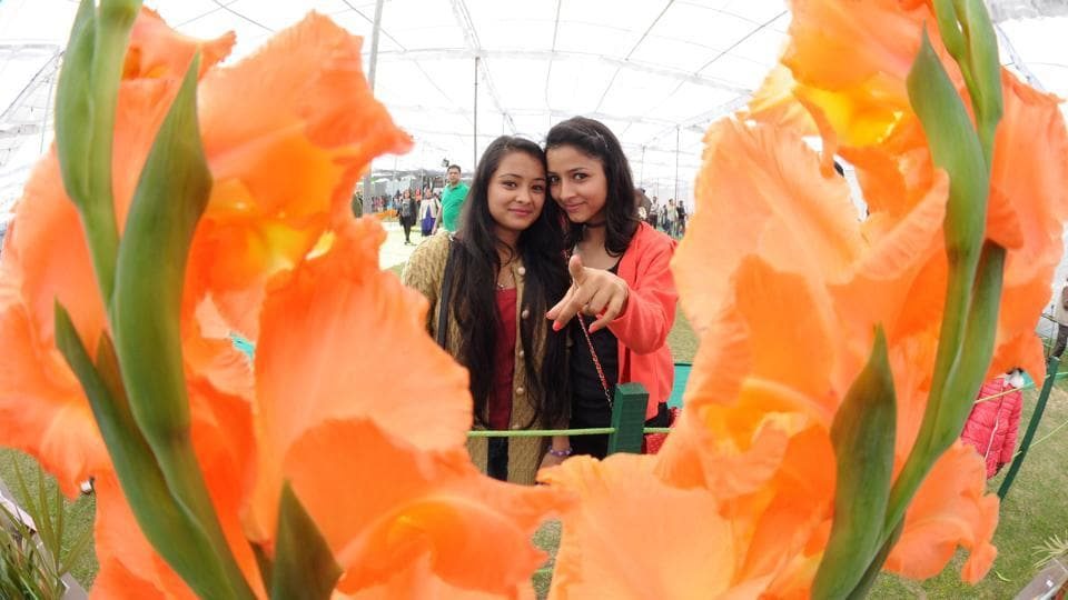 Girls enjoying Rose Festival at Zakir Hussain Rose Garden in Chandigarh on Friday.  (Anil Dayal/HT Photo)