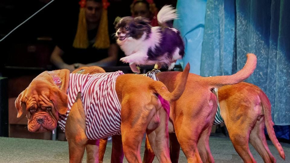 Dogs perform during the presentation of the new show