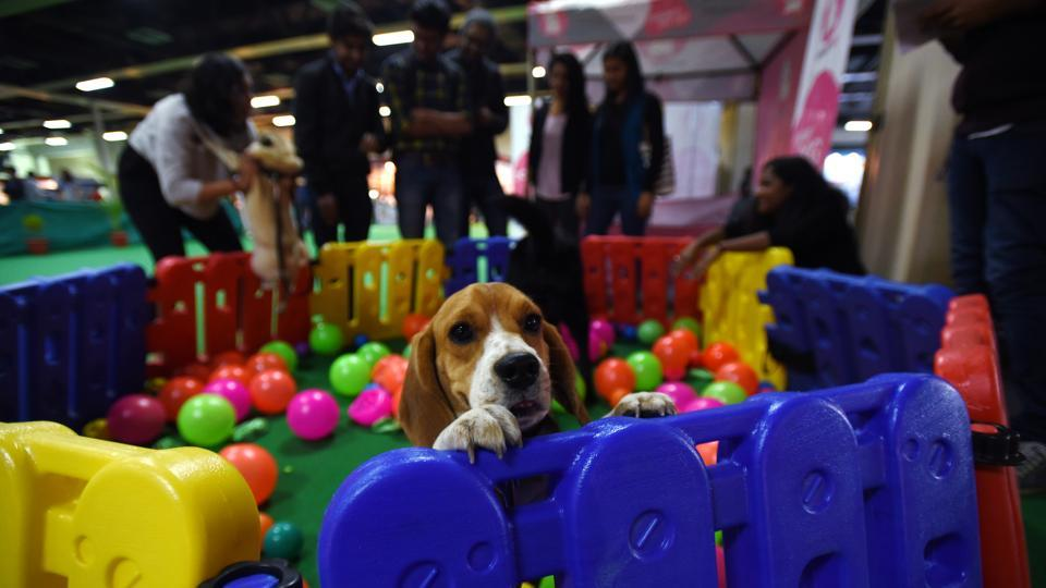 A dog enjoys himself in a play area set up for animals at the 9th India International Pet Trade Fair in Noida on Friday.