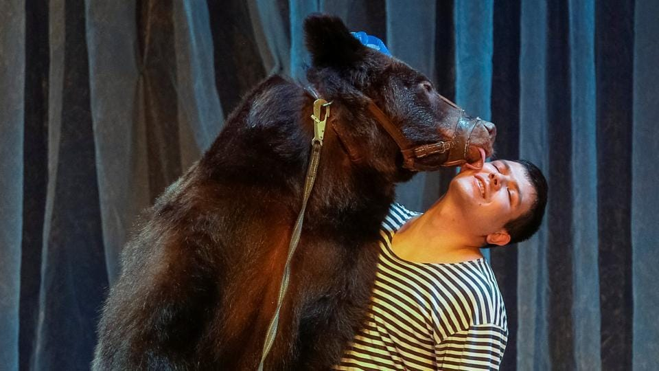 A bear and its tamer perform during the presentation of the new show