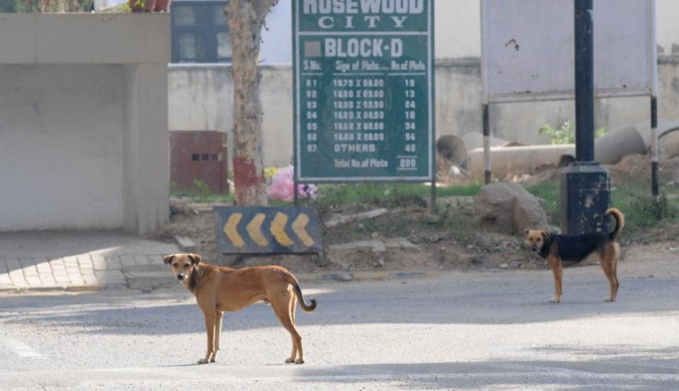 Although the civic agencies claimed to have sterilised as man as 50,000 dogs in the Sector 49 area, the number of dog bite cases has continued to rise.