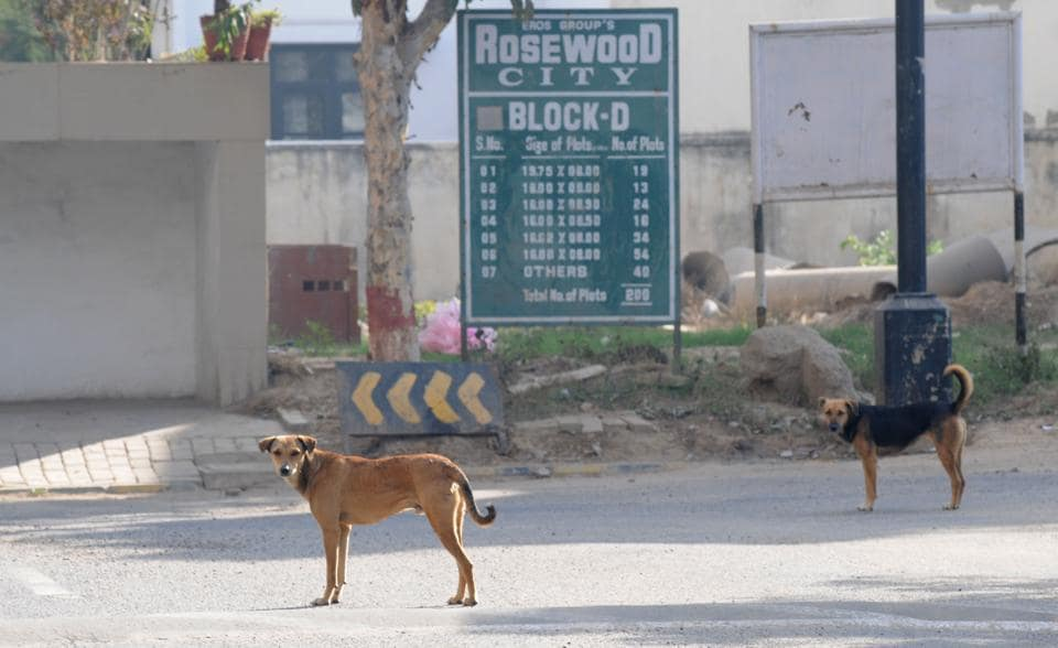 The residents of Sector 29 had demanded the removal of strays from the premises after several dog bite incidents.