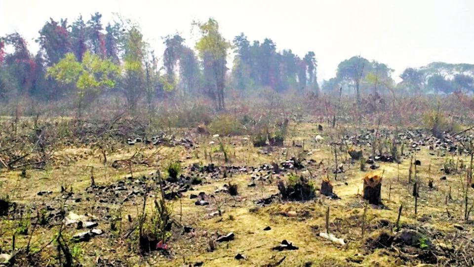Gurgaon,trees,Gurgaon tree felling