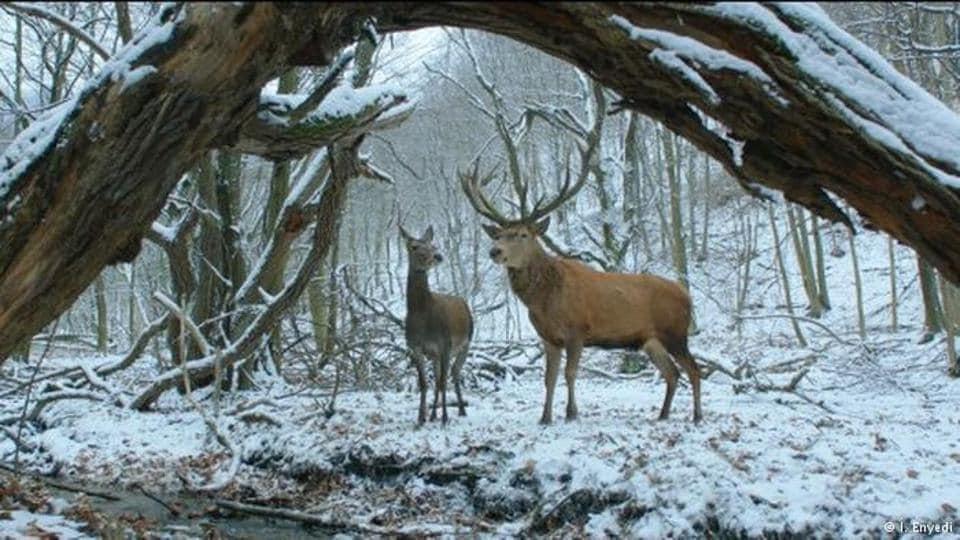 Golden Bear,Berlin film festival,On Body and Soul