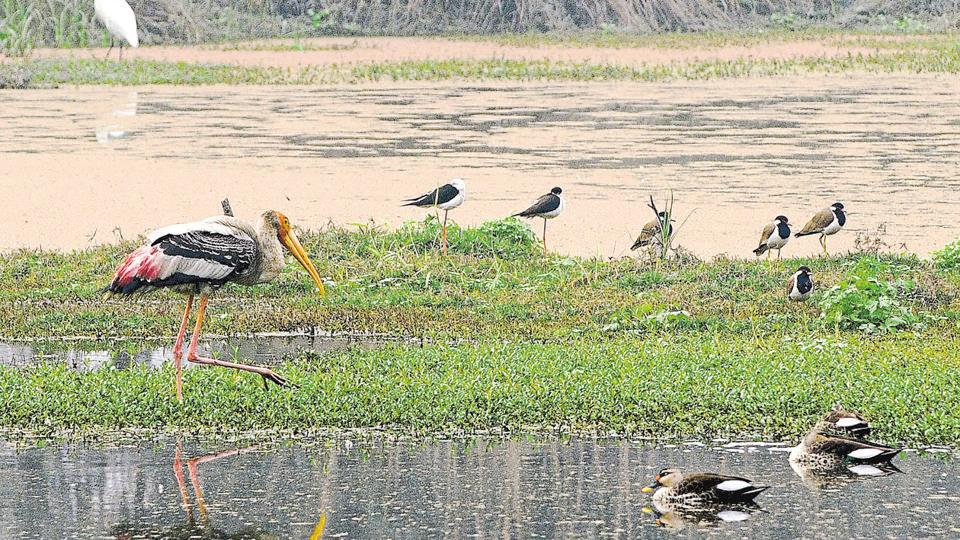 The Surajpur wetland is a haven for migratory birds.