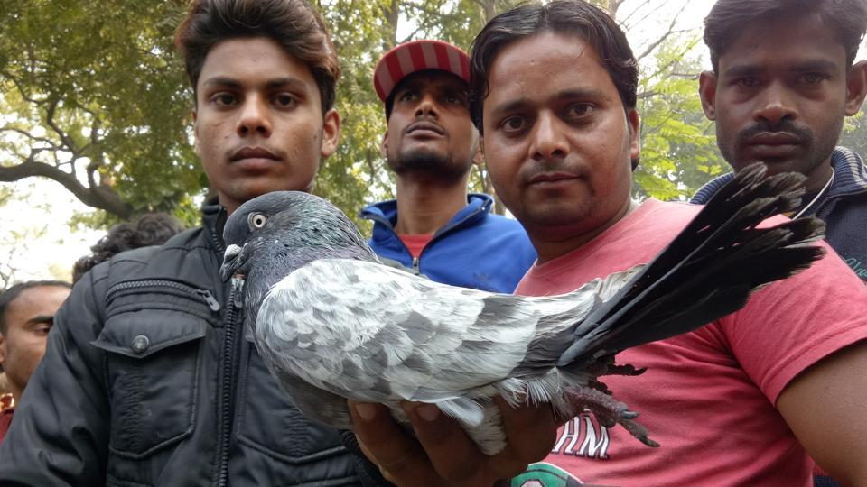 The traditional weekly 'kabootar mandi' near Company Bagh in Lucknow remained crowded with pigeon handlers on Sunday.