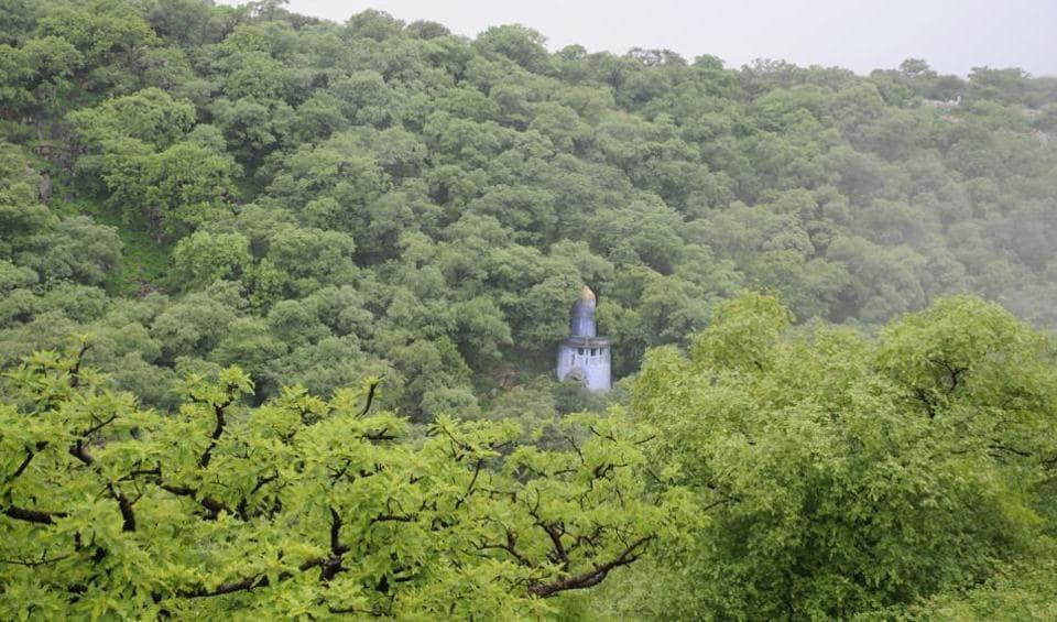 Gurgaon,Gurgaon trees,Aravallis