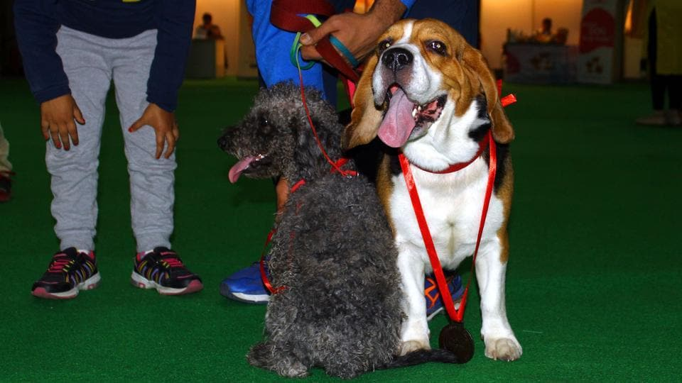 A visitor with his dog at the 9th International Pet Trade Fair which ended on Sunday at the Expo Centre, Noida.