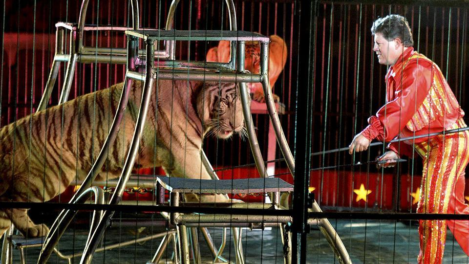 Melha Shrine Circus,Shriners Hospitals for Children,Lions