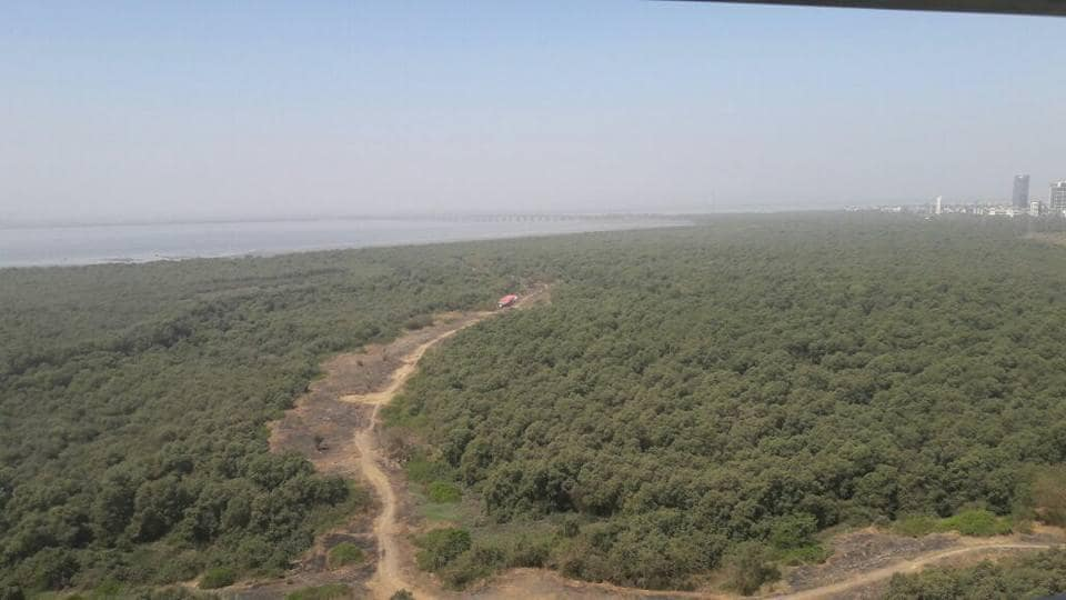 The stretch of mangroves along the Palm Beach Road that the RAWW alleged has been destroyed.
