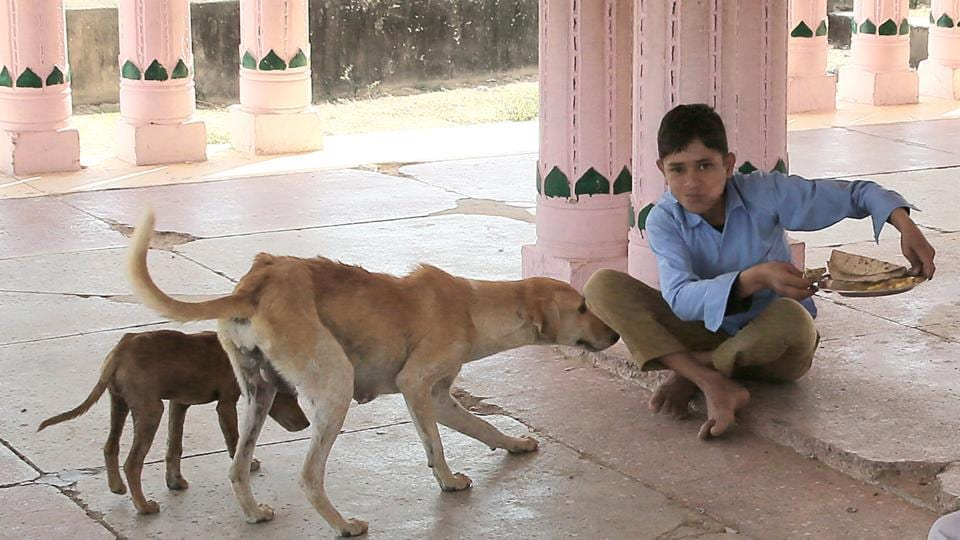 Rajasthan,Midday meals,Dogs snatching food