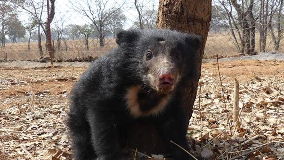 The orphaned cub shortly after its rescue.