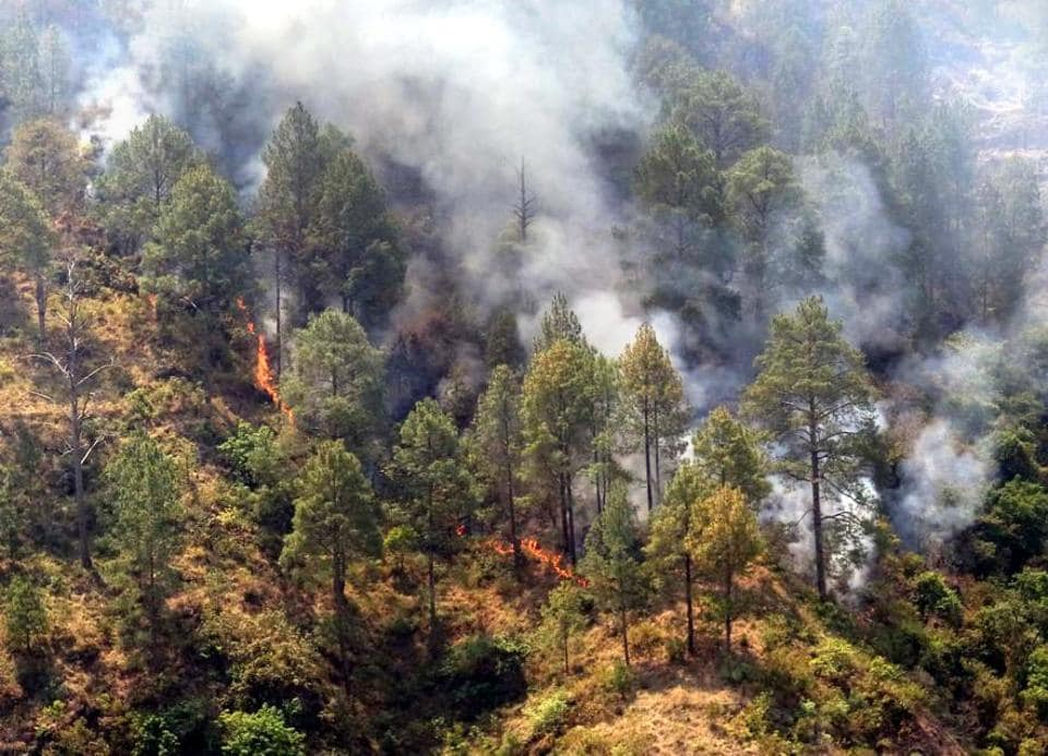 In 2016, wildfires gutted over 4,000 hectares of forest land in Uttarakhand.