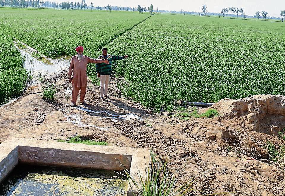 Farmer Karamjit Singh (left) shows his first wheat crop after eight years at Rahurianwali village; and (below) a rejuvenated pond at Kundal village, in Fazilka district, being shown by executive engineer, irrigation, Manoj Bansal.