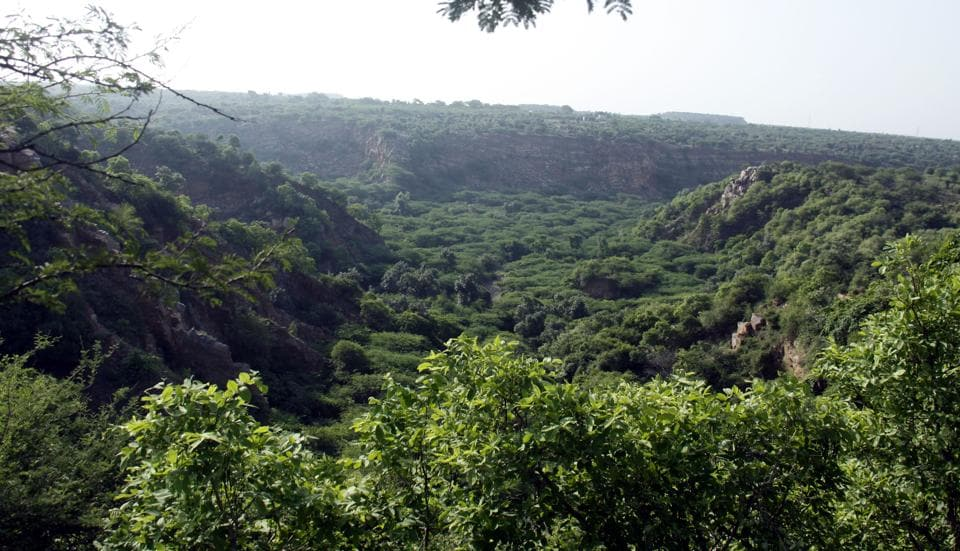 The forest cover in the Aravalli hills region is threatened by rampant encroachment and deforestation.