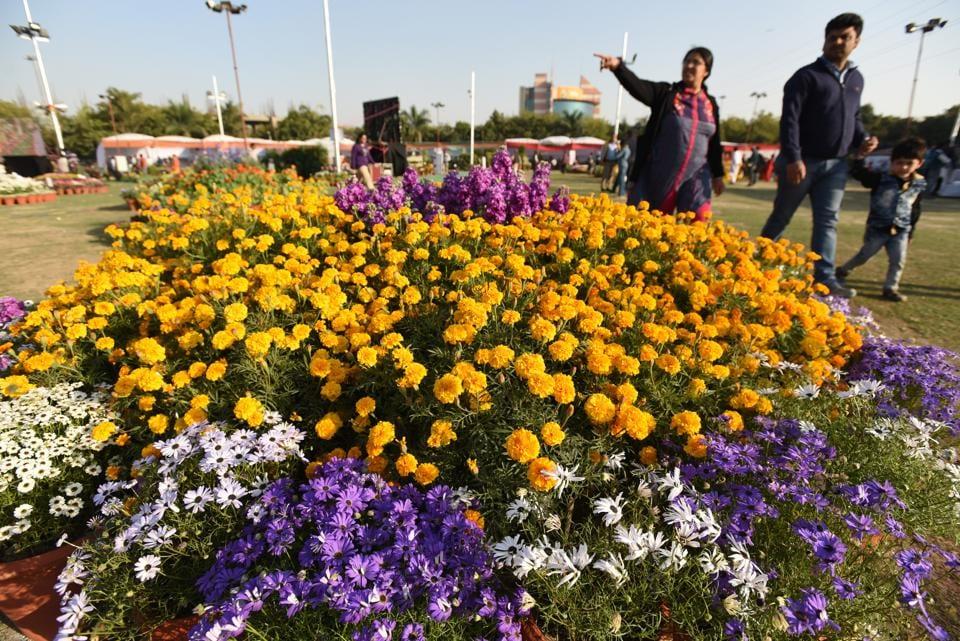 Noida,Noida flower show,Air purifying plants