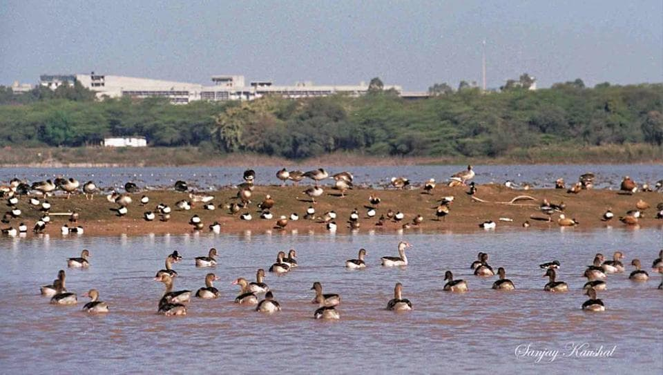 This iconic photograph from January 2000 captures the silted isles of Sukhna lake and an abundance of Greylag geese.