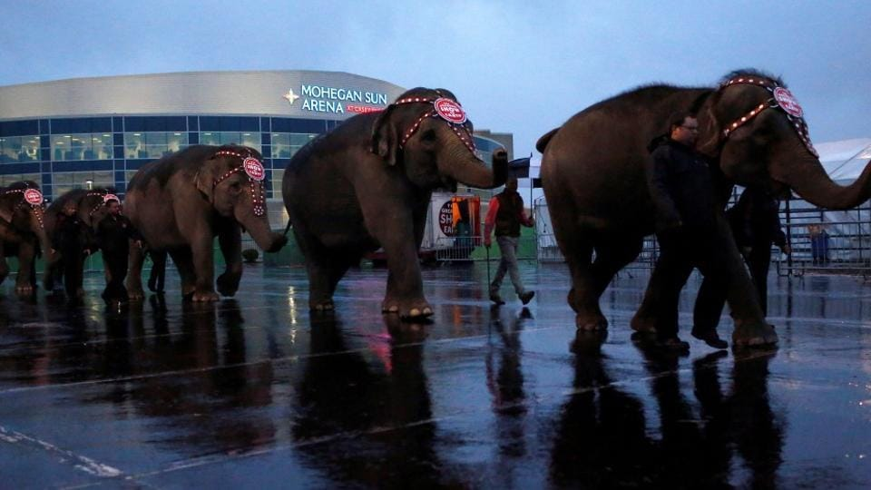 """The Central Zoo Authority has """"fully backed"""" a proposal to ban the use of elephants in circuses, a fading remnant of pre-liberalisation India."""