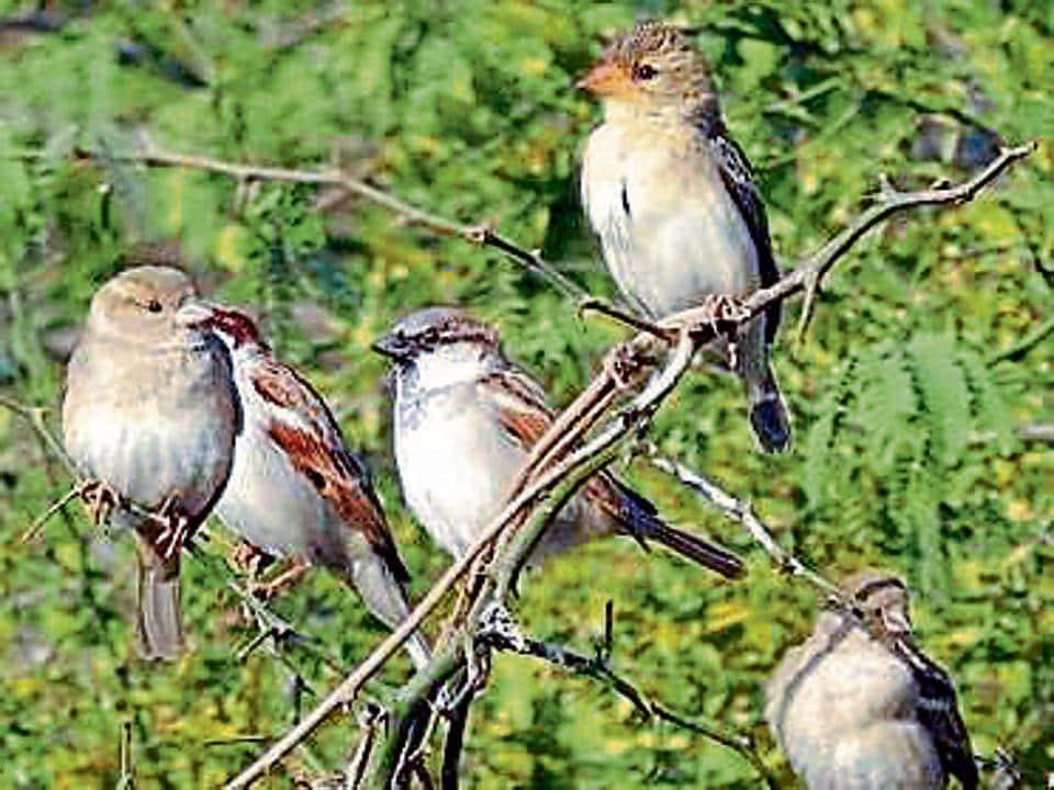 Bird census,Campus bird census,Delhi birds