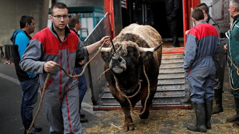A French farmer leads his cow  for the opening of the International Agricultural Show in Paris. (Benoit Tessier / REUTERS)