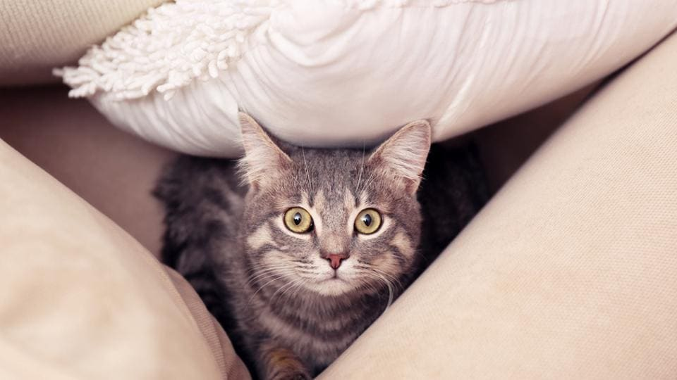 Pet cats,Pet care,Chemicals at home