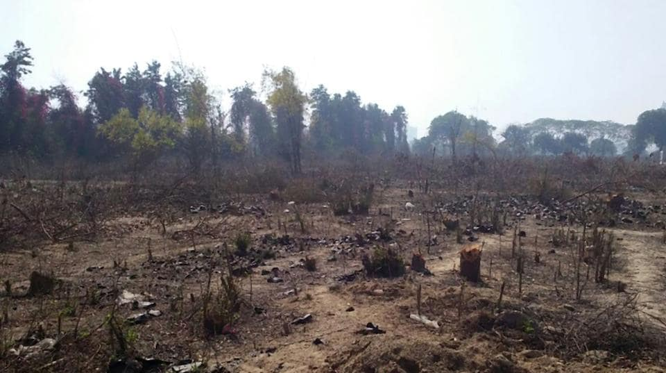 The trees were axed from an 11-acre plot in Sector 111, Gurgaon, on February 18.