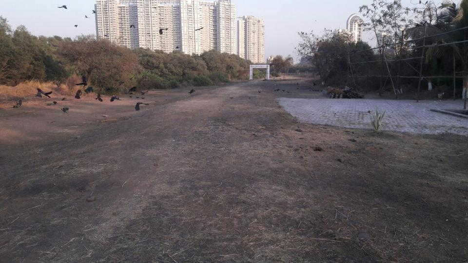 The area inside Navi Mumbai mangroves after it was cleaned.