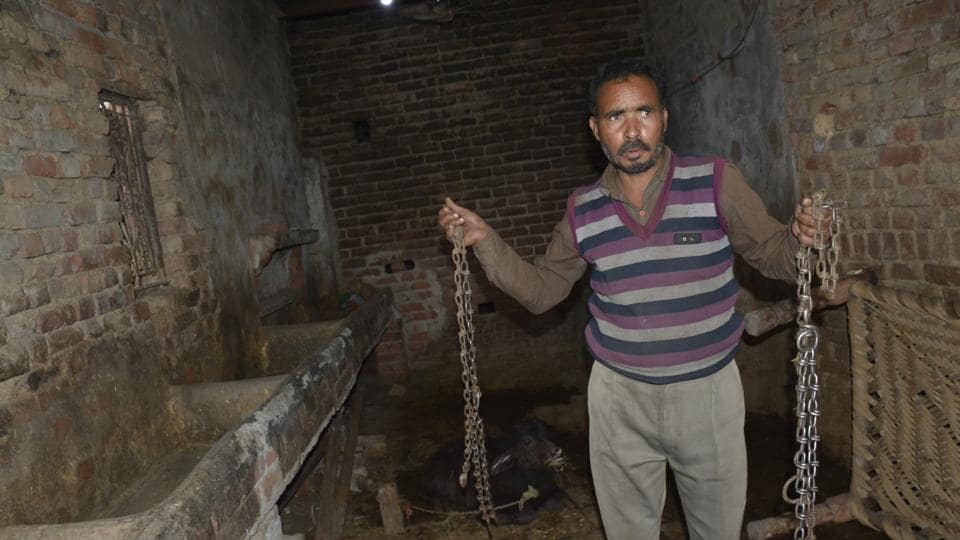 The dairy farm owner said the men also robbed him of Rs20,000 apart from the three buffaloes.