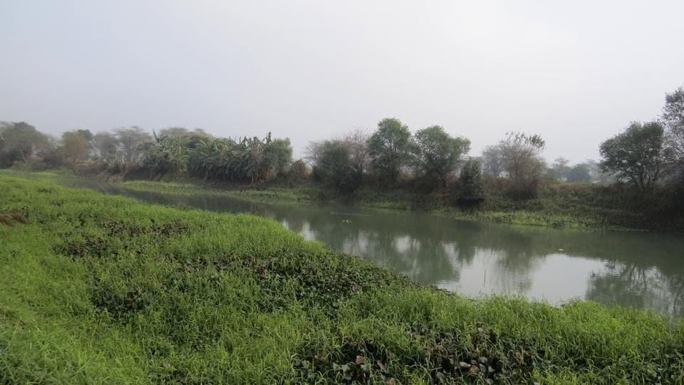 A view of Kanjli wetland Kanjli Wetland near Kapurthala.