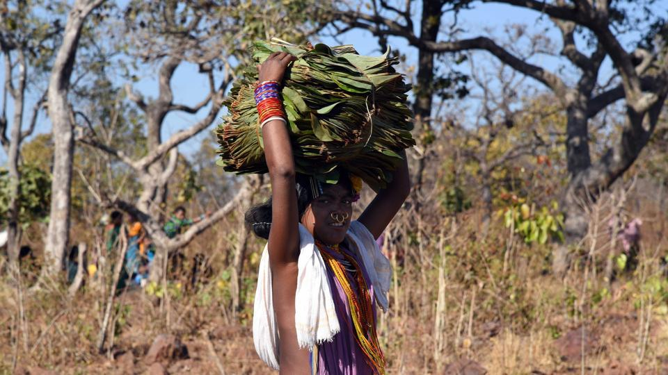 A Dongria Kandh tribal woman smiles as she carries traditional herb leafs for use in food and medicine to her home. (Arabinda Mohapatra)