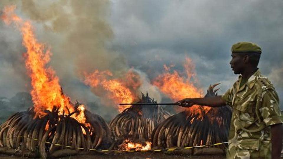 World Wildlife Day,Rhino horns,Elephant tusks