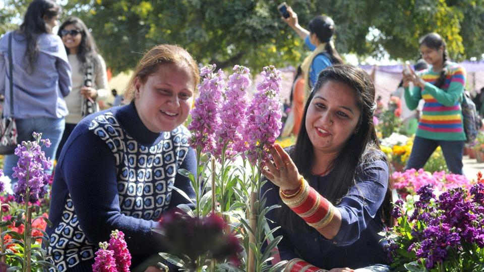 Some visitors were seen taking selfie with flowers while others admired the beauty of nature.  (Gurminder Singh/HT Photo)