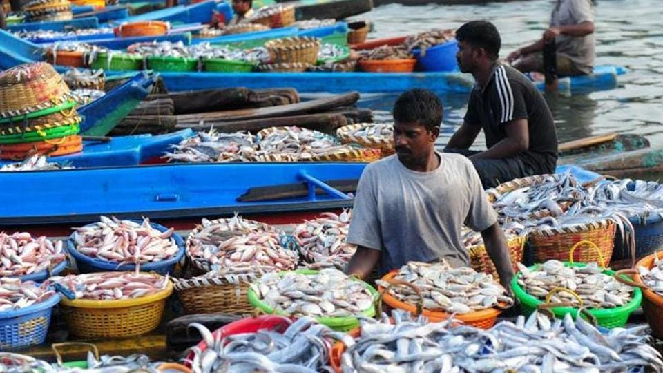 Indian fishermen unload baskets of fish from boats at a harbour in Chennai on June 5,  2016, as fishermen return with their catch after a 45-day fishing ban. Authorities in Tamil Nadu imposes an annual ban on fishing by mechanised vessels to protect marine life, with only 'country boats' operating within five nautical miles off the coast.