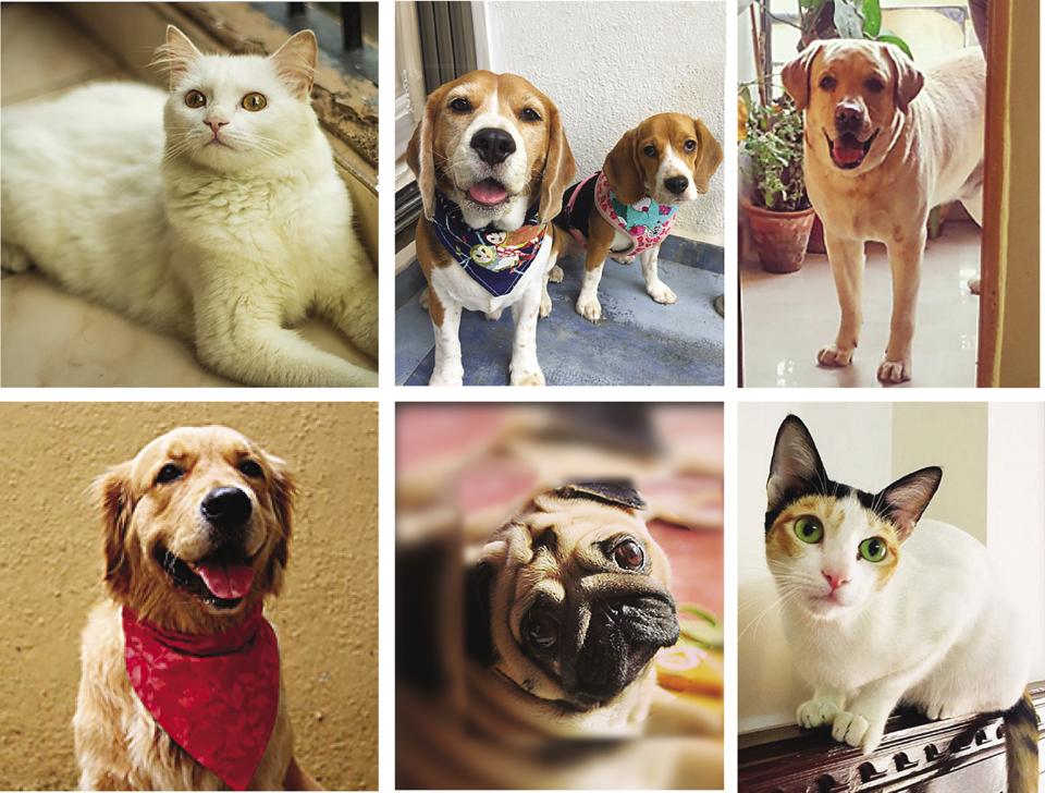 We 'heart' these furry creatures