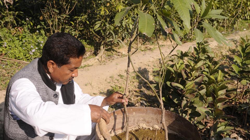 Mango belt,Mohammad Miyan,Malihabad