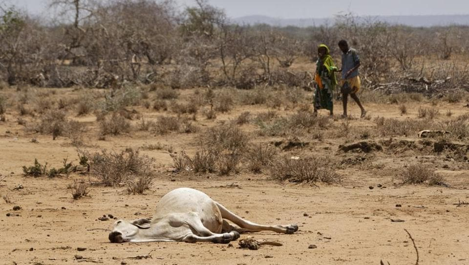 Villagers walk past the carcass of a dead cow in the drought-affected village of Bandarero, near Moyale town on the Ethiopian border, in northern Kenya .The U.N. humanitarian chief, Stephen O'Brien, toured Bandarero village on Friday and called on the international community to act to 'avert the very worst of the effects of drought and to avert a famine to make sure we don't go from what is deep suffering to a catastrophe.' (Ben Curtis/ AP)