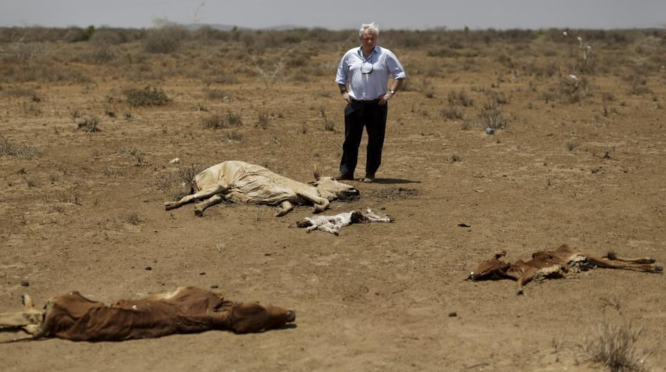 U.N. humanitarian chief Stephen O'Brien inspects the carcasses of dead cows in the drought-affected village of Bandarero, near Moyale town on the Ethiopian border, in northern Kenya . O'Brien said he is confident the United States will step up and donate to aid appeals amid concerns of possible foreign aid cuts under President Donald Trump.  (AP)