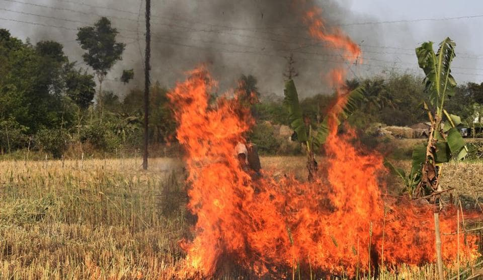 Government officers set fire to wheat crop in Sonpukur village on Chapr a block in Nadia district of West Bengal.