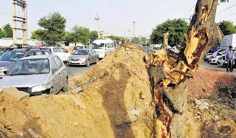 Delhi pollution,Delhi high court,tree felling