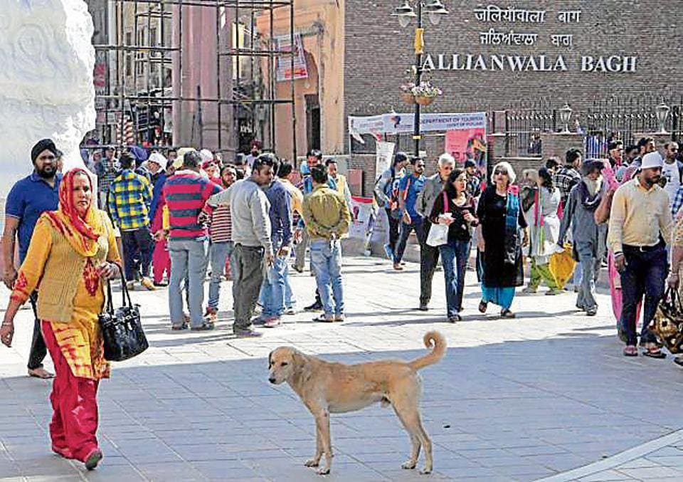 A stray dog roaming on the Heritage Street in Amritsar on Monday.